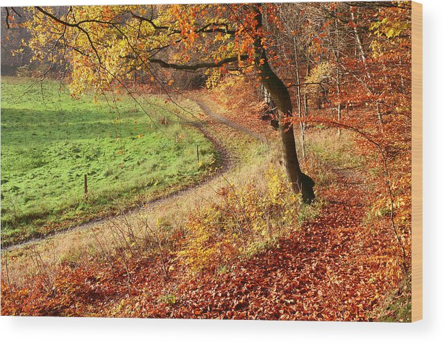 Autumn Wood Print featuring the photograph Colorul Forest by Jean Schweitzer