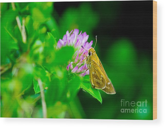 Common Wood Print featuring the photograph Common Banded Skipper by Scott Hervieux