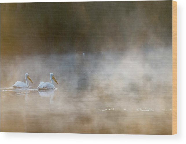 Pelican Wood Print featuring the photograph Companions by Majestic Moments Photography,
