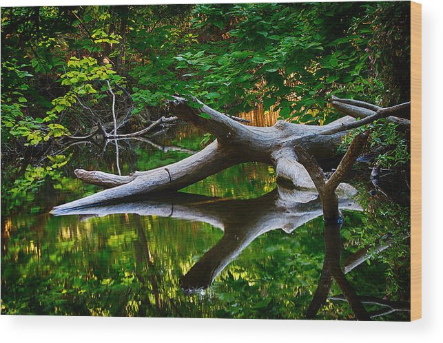 Bidwell Wood Print featuring the photograph Contemplation by Robert Woodward