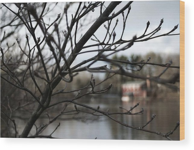 Landscape Wood Print featuring the photograph Cooper's Pond by Robin Mahboeb