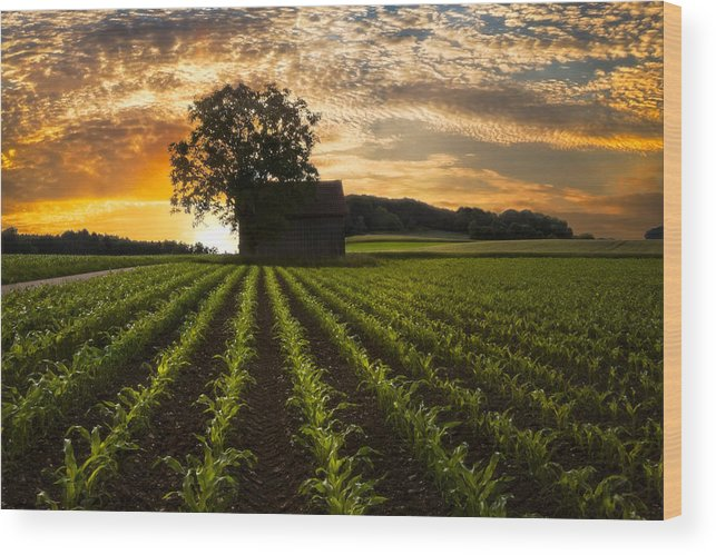 Appalachia Wood Print featuring the photograph Corn Rows by Debra and Dave Vanderlaan