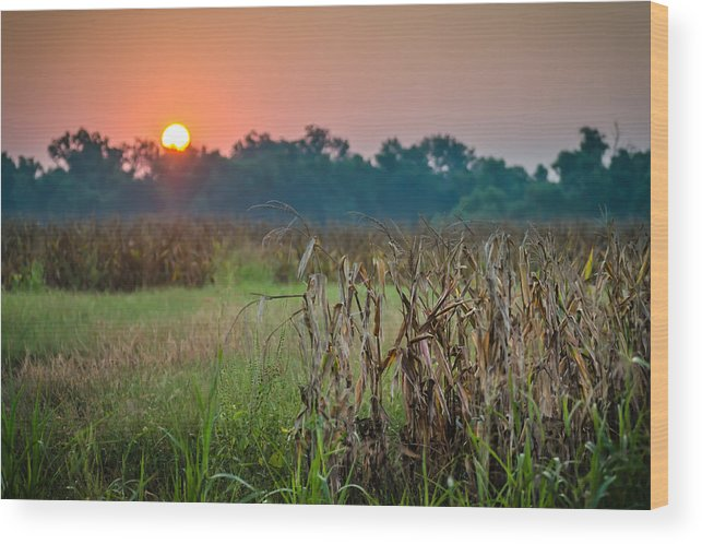 Cornfield Wood Print featuring the photograph Cornfield Morning by James Barber