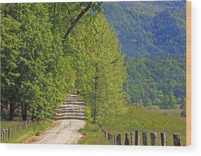 Country Road. Green Trees Wood Print featuring the photograph Country Road by Geraldine DeBoer