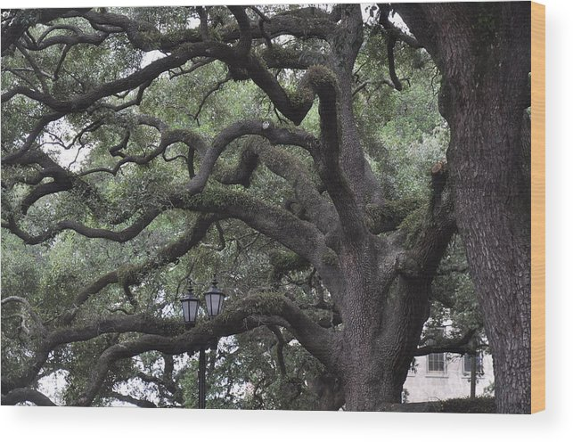 Live Oaks Wood Print featuring the photograph Crooked Branches by Kay Mathews
