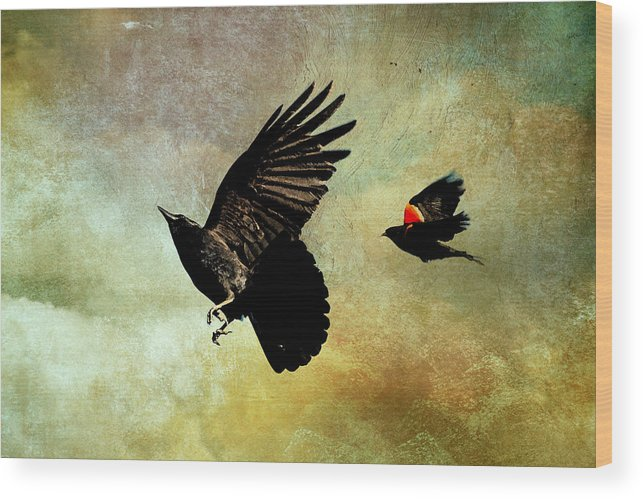 Crows Wood Print featuring the photograph Crow And Red-winged Blackbird by Peggy Collins