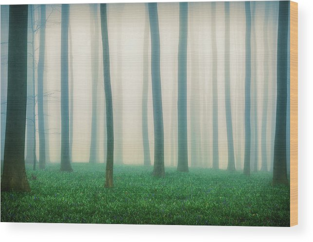 Forest Wood Print featuring the photograph Daydreaming Of Bluebells by Adrian Popan
