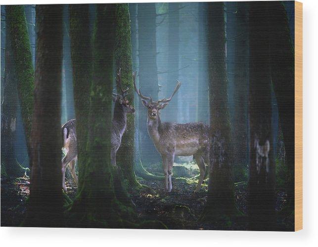 Animal Wood Print featuring the photograph Deers by Patrick Aurednik