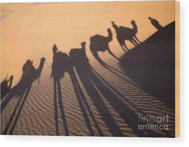 Desert Wood Print featuring the photograph Desert Shadows by Delphimages Photo Creations