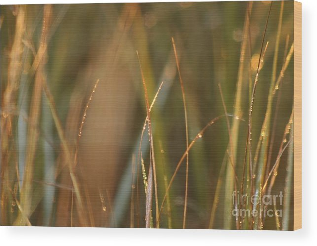 Dew Wood Print featuring the photograph Dewy Grasses by Nadine Rippelmeyer