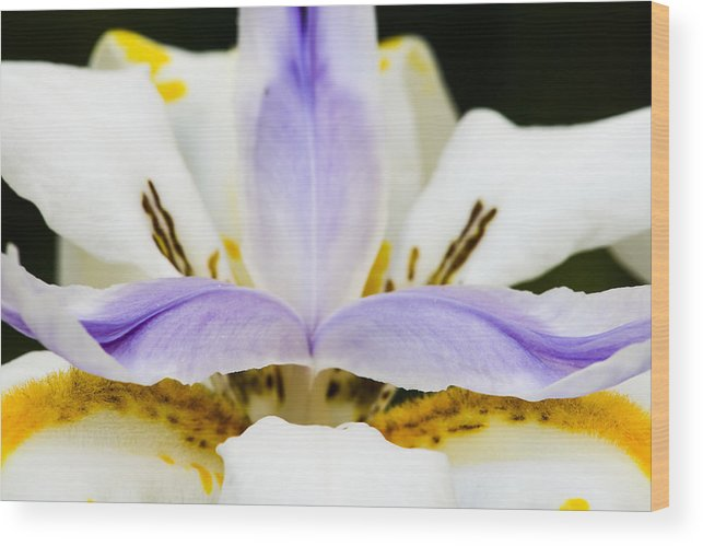 Dietes Grandiflora Wood Print featuring the photograph Dietes Grandiflora Close-up by David Waldo