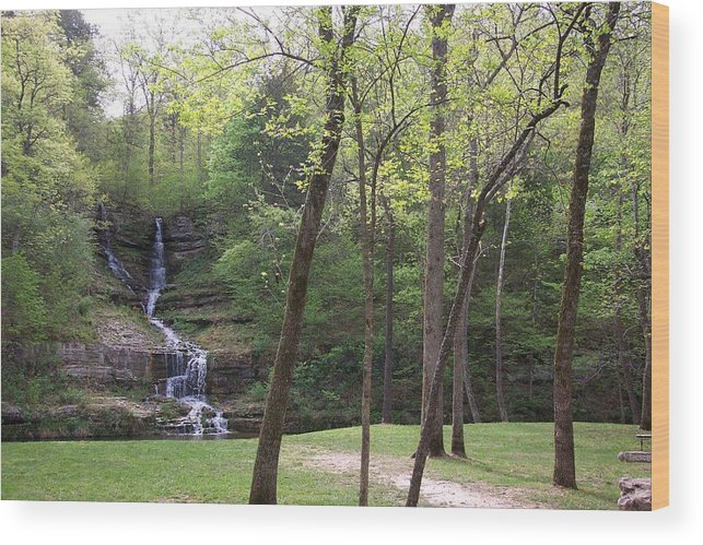 Trees Wood Print featuring the photograph Dogwood Canyon 3 by Pat Follett
