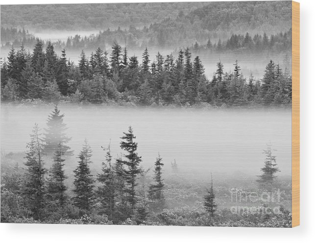 Dolly Sods Wood Print featuring the photograph Dolly Sods Wilderness D300_10363_bw by Kevin Funk