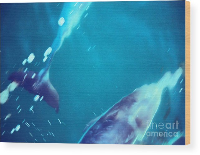 Dolphins Wood Print featuring the photograph Dolphin Pack by Loretta Jean Photography