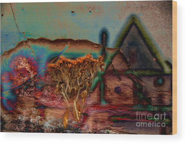 Composite Wood Print featuring the photograph Dried And Growing From A Painted Rock by Jay Ressler