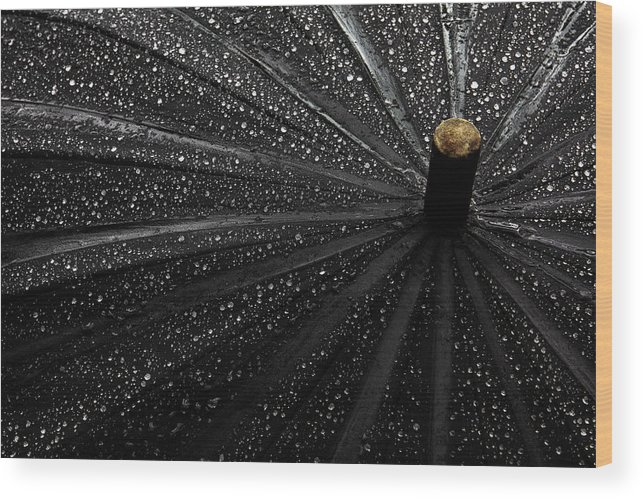 Umbrella Wood Print featuring the photograph Drops by Gilbert Claes