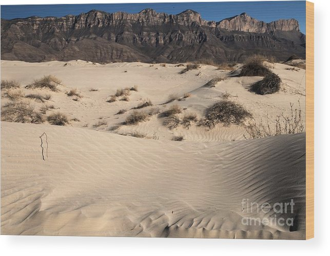 Guadalupe Mountains National Park Wood Print featuring the photograph Dunes At The Guadalupes by Adam Jewell