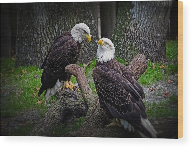 Eagle Wood Print featuring the photograph Eagle Couple by Cheryl Cencich