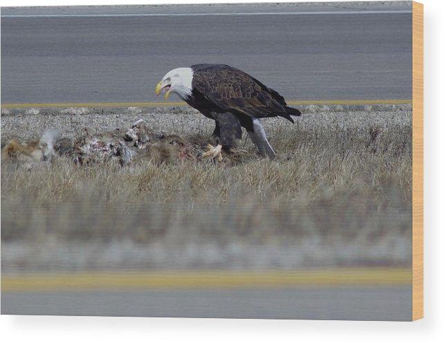 Wood Print featuring the photograph Eagle Feeding by John Pratt