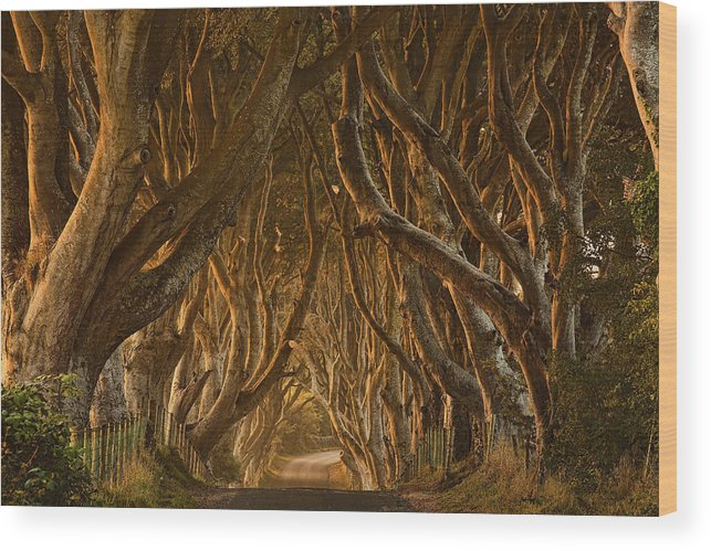 Dark Wood Print featuring the photograph Early Morning Dark Hedges by Derek Smyth