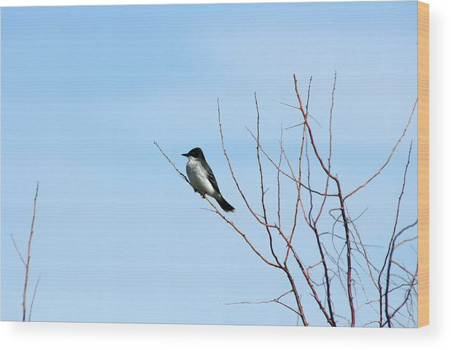 Eastern Kingbird Wood Print featuring the photograph Eastern Kingbird In A Tree by Robert Hamm