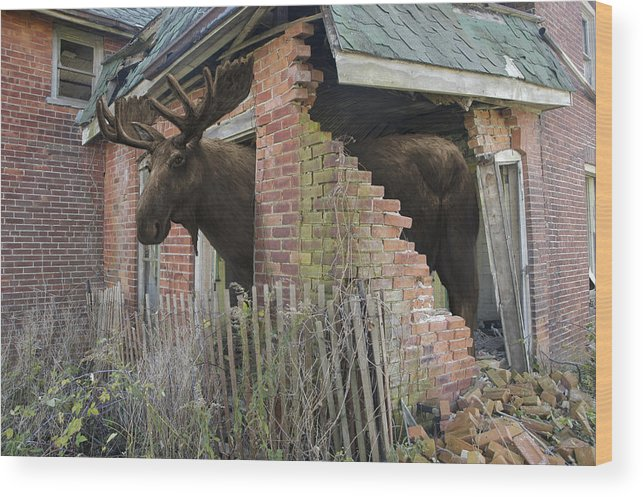Moose Wood Print featuring the mixed media Egress by Mark Zelmer