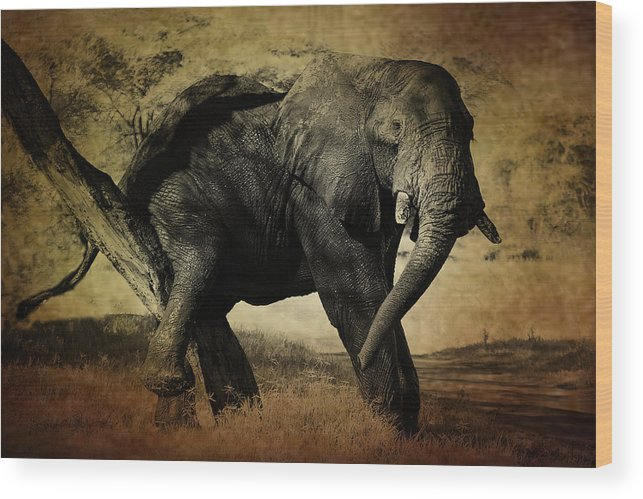 Elephant Wood Print featuring the photograph Elephant by Christine Sponchia