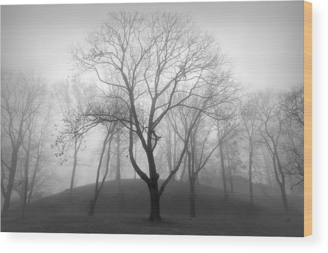 Nature Wood Print featuring the photograph Empty by Diana Angstadt