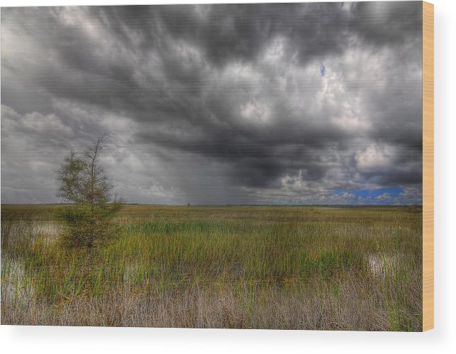 Bush Wood Print featuring the photograph Everglades Storm by Rudy Umans