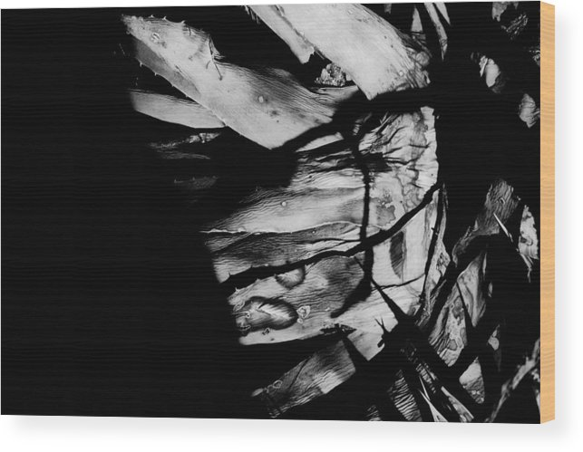 Black Wood Print featuring the photograph Expired by Jessica Shelton