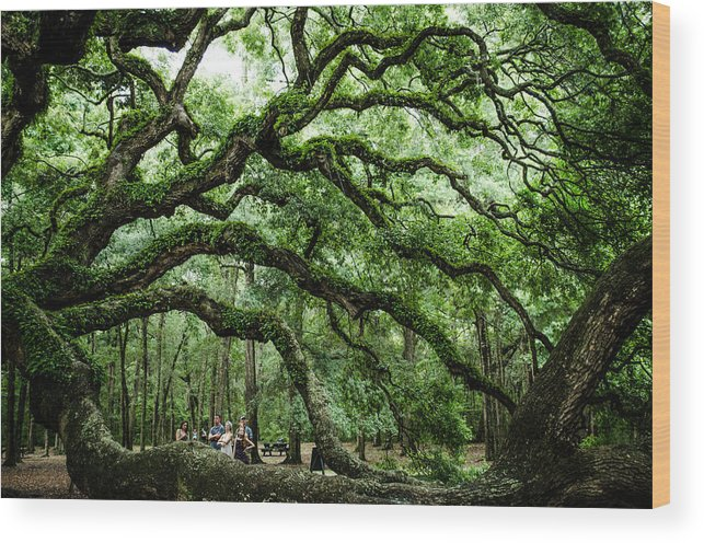 Tree Wood Print featuring the photograph Fairy Tale Branches by Jeff Ortakales