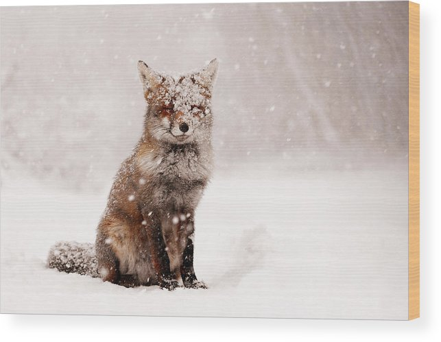 Fox Wood Print featuring the photograph Fairytale Fox _ Red Fox In A Snow Storm by Roeselien Raimond