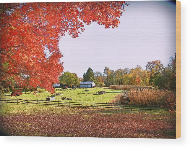 Fall Colors Wood Print featuring the photograph Fall Farm by Sheryl Bergman