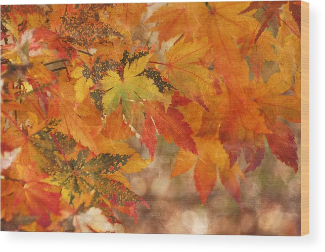 Autumn Wood Print featuring the photograph Falling Colors I by Leda Robertson