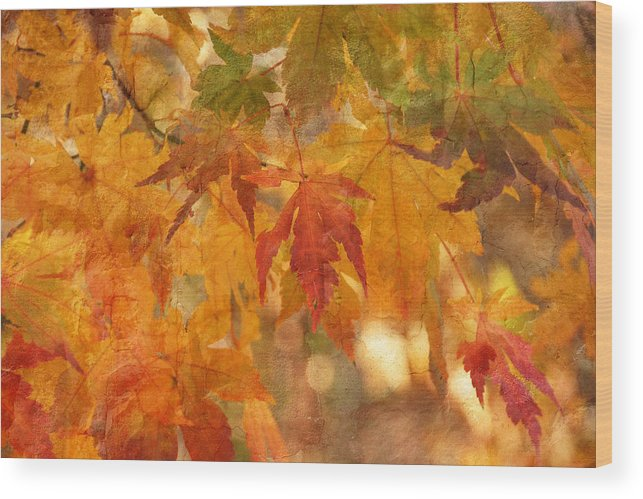 Autumn Wood Print featuring the photograph Falling Colors II by Leda Robertson
