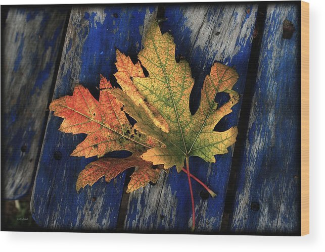 Nature Wood Print featuring the photograph Falling For Colour by Linda Sannuti