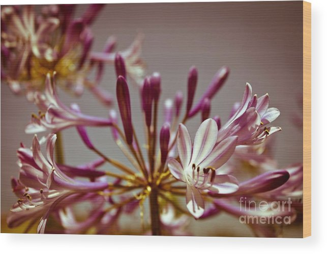 Fine Art Print For Sale Wood Print featuring the photograph Fantastic Bloom by Sviatlana Kandybovich