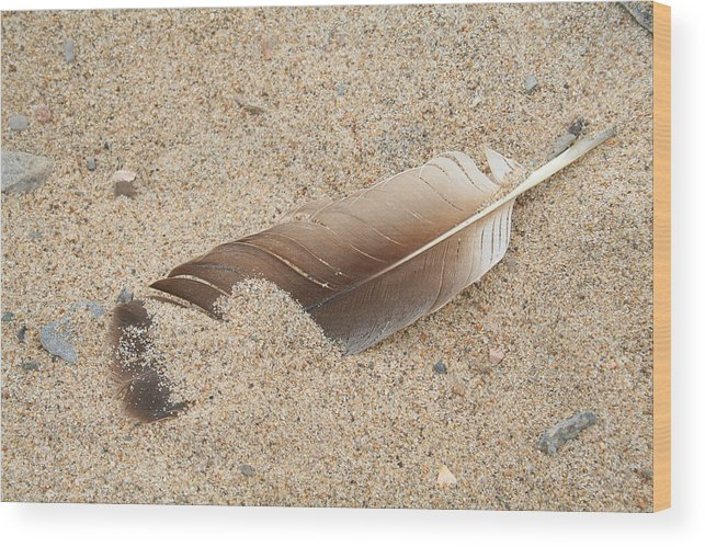 Feather Wood Print featuring the photograph Feather On The Beach by Bob and Jan Shriner
