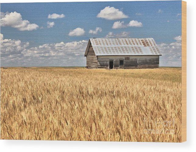 Grain Wood Print featuring the photograph Field Of Grain by Carole Martinez