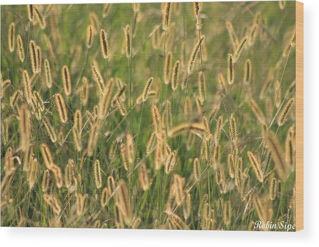 Reflections Wood Print featuring the photograph Fields Of Gold by Robin Vargo