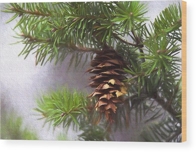 Fir Cone Wood Print featuring the photograph Fir Cone Digital Painting by Sharon Talson