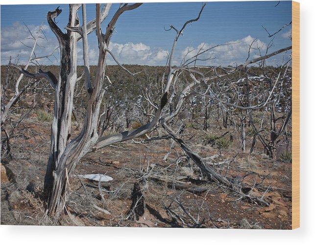 Mesa Wood Print featuring the photograph Fire Damage by Claus Siebenhaar