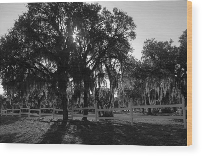 Trees Wood Print featuring the photograph Florida Country Shade by Jen T