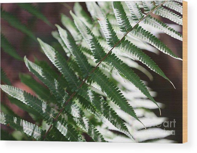 Fern Wood Print featuring the photograph Florida Fern by Carol Groenen