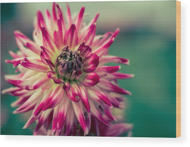 Pink Wood Print featuring the photograph Flower by Adrian De Juan