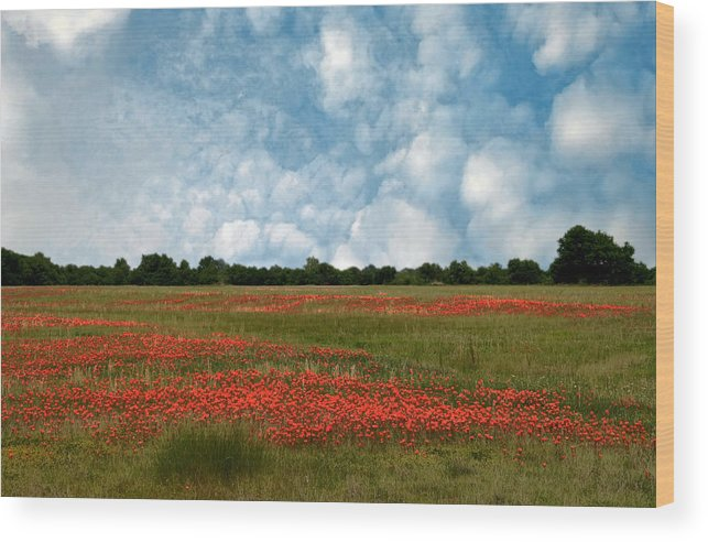 Flower Field Wood Print featuring the photograph Flower Fields Forever by Carolyn Fletcher