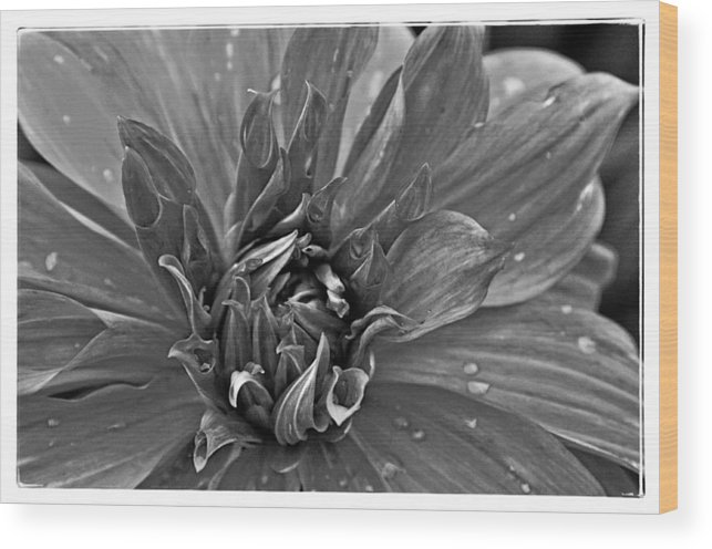 Flower Wood Print featuring the photograph Flower by Mike Martin