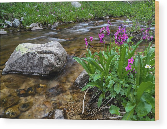 Stream Wood Print featuring the photograph Flowers And Stream by Kevin Buffington