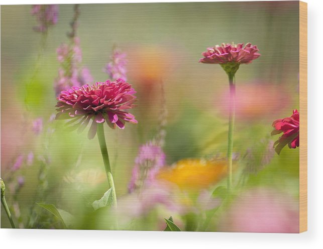 Flowers Wood Print featuring the photograph Flowers Of The Garden by Chad Davis