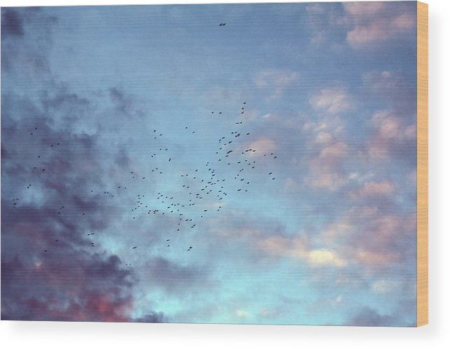 Slying Birds At Sunset Sky Canvas Prints Wood Print featuring the photograph Flying Birds At Sunset by Eremia Catalin